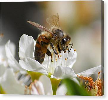 Canvas Print featuring the photograph Bee4honey by Patrick Witz