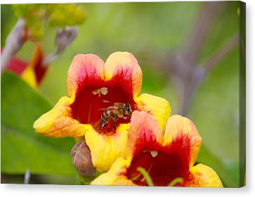 Beeautiful Canvas Print