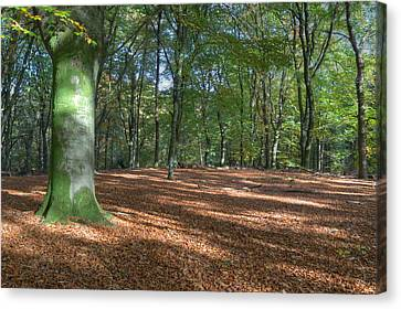 Beech Forest In Autumn On The Veluwe Canvas Print by Ronald Jansen
