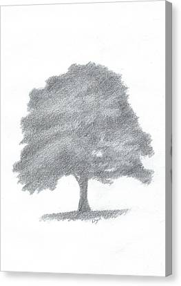 Beech Tree Drawing Number Three Canvas Print by Alan Daysh