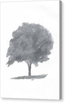 Beech Tree Drawing Number Two Canvas Print by Alan Daysh
