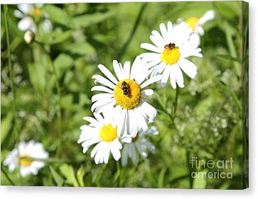 Bees And Daisies Canvas Print by Suzi Nelson