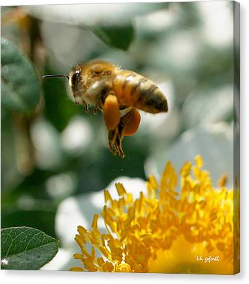Canvas Print featuring the photograph Bee's Feet Squared by TK Goforth