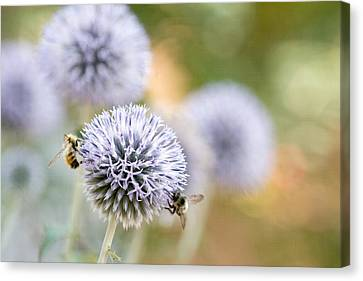 Canvas Print featuring the photograph Bees In The Garden by Peggy Collins