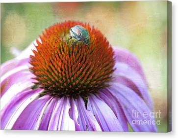 Beetle Bug Canvas Print by Juli Scalzi