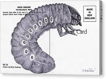 Painted Details Canvas Print - Beetle Larvae Postcard by Sarah Sutherland