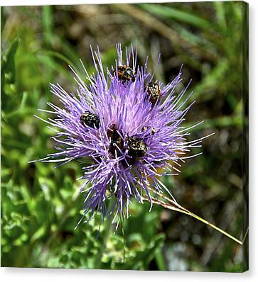 Canvas Print featuring the photograph Beetlemania by Dee Dee  Whittle