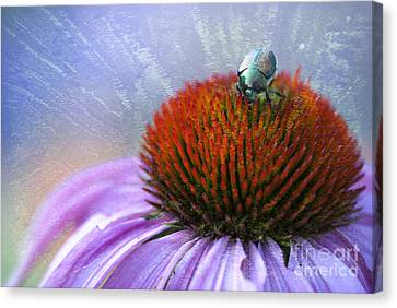 Coneflower Canvas Print - Beetlemania by Juli Scalzi