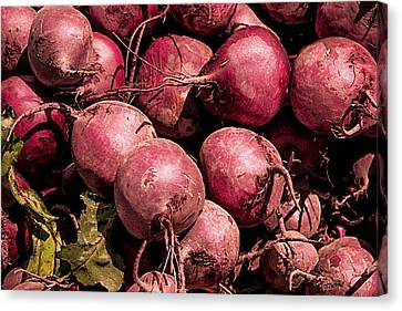 Beets - Earthy Wonders Canvas Print by Kathy Bassett