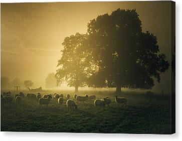 Before Dawn Gathering Canvas Print
