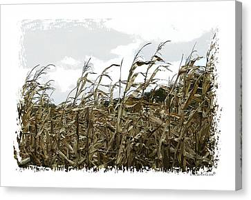 Before The Harvest Canvas Print by Londie Benson