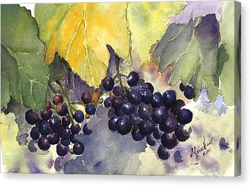 Grapevines Canvas Print - Before The Harvest by Maria Hunt