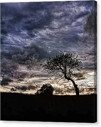 Nova Scotia's Lonely Tree Before The Storm  Canvas Print