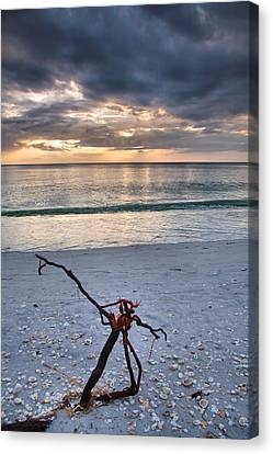 Before The Storm Canvas Print by Steven Ainsworth