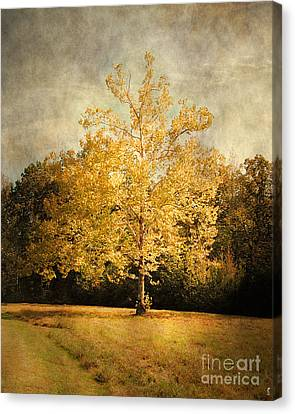 Beginning Of Autumn Canvas Print by Jai Johnson