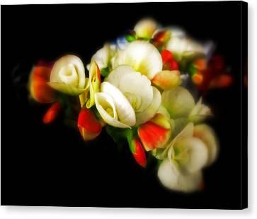 Begonia Canvas Print