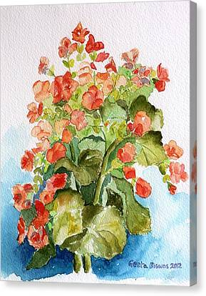 Begonias Still Life Canvas Print by Geeta Biswas