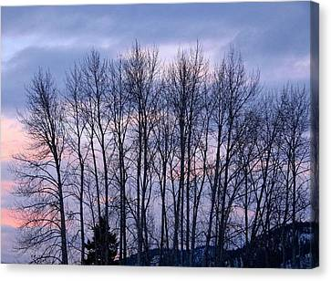 Fir Trees Canvas Print - Beguiling Beauty by Will Borden