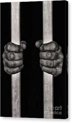 Behind Bars Canvas Print by Svetlana Sewell