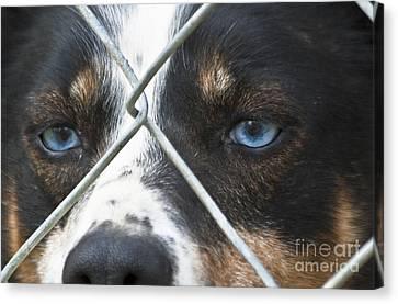 Behind Fences Canvas Print by Heiko Koehrer-Wagner