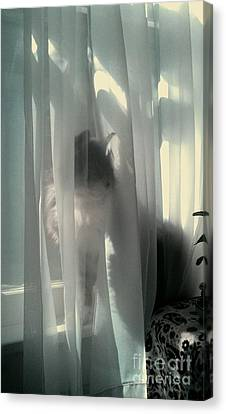 Canvas Print featuring the photograph Behind The Curtain by Jacqueline McReynolds