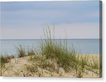 Behind The Dune Grasses 3 Canvas Print