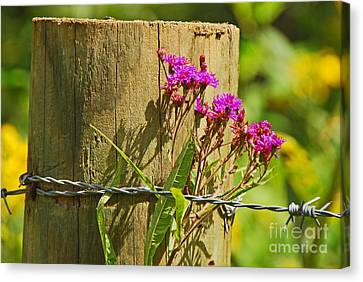 Behind The Fence Canvas Print by Mary Carol Story