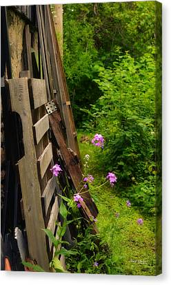 Behind The Old Shed Canvas Print by Mary Machare