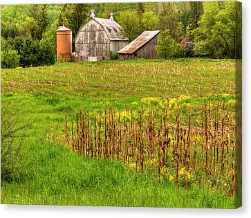 Behind The Rose Barn 2 Canvas Print by Thomas Young