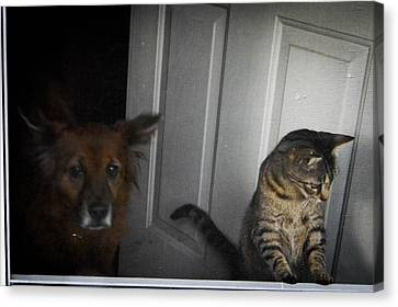 Behind The Screen Door Canvas Print by Christy Usilton