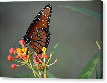 Behold The Queen Canvas Print by Judy Wanamaker