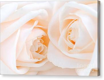 Beige Roses Canvas Print