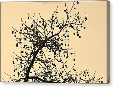 Bejewelled Nature Canvas Print by Sonali Gangane