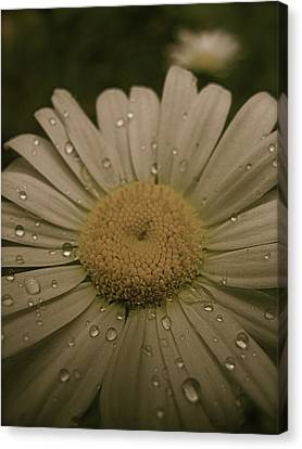 Bejewelled Canvas Print by Tim Good