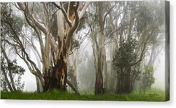 Feeling Misty Canvas Print