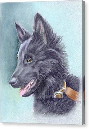 Belgian Sheepdog Puppy Canvas Print by Ruth Seal
