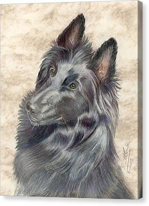 Belgian Sheepdog Canvas Print by Ruth Seal