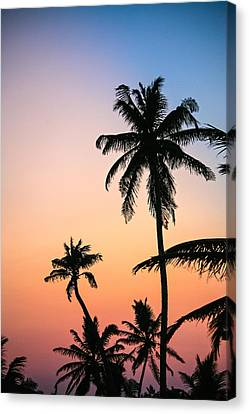 Belize Palms Canvas Print