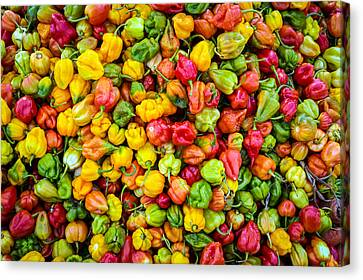 Belize Peppers II Canvas Print