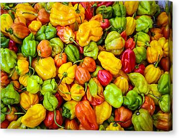 Belize Peppers Canvas Print
