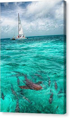 Belize Turquoise Shark N Sail  Canvas Print