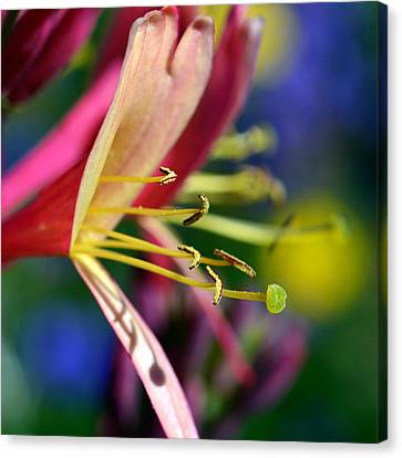 Bell Flower In Red Canvas Print