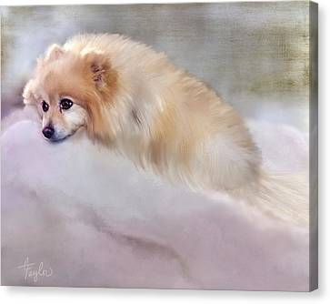 Bella Boo Canvas Print by Colleen Taylor