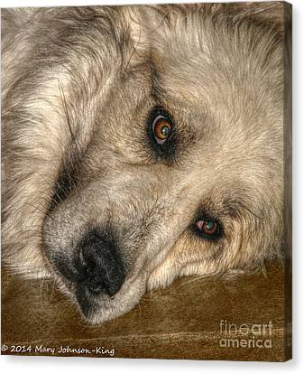 Mary King Canvas Print - Bella Great Pyrenees by Mary  King