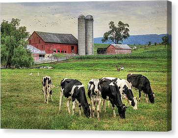 Belleville Cows Canvas Print by Lori Deiter
