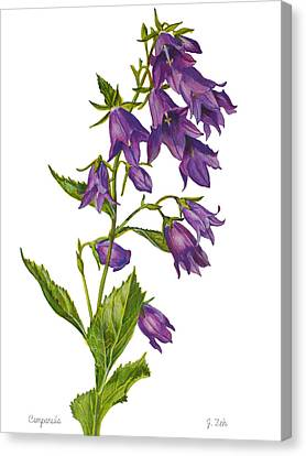 Bellflower - Campanula Canvas Print
