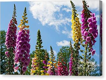 Bells Against The Sky Canvas Print by Terry Weaver