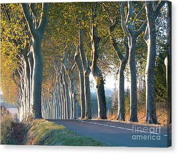 Beloved Plane Trees Canvas Print by France  Art