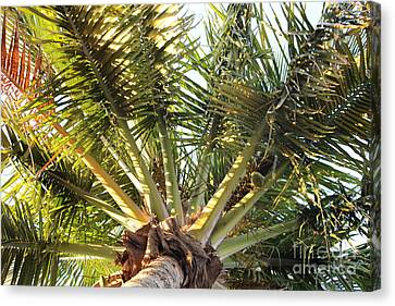 Below A Palm Tree Canvas Print