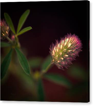 Below The Flower Line Canvas Print by Bob Orsillo